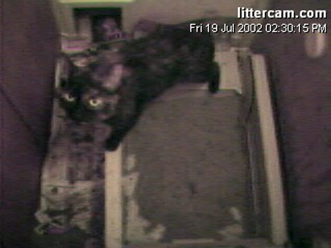 Welcome to LitterCam.com! Explosive Diarrhea: three years & counting!